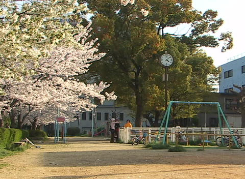 Large cherry tree in bloom and a large clock on a pole... Stock Video Footage
