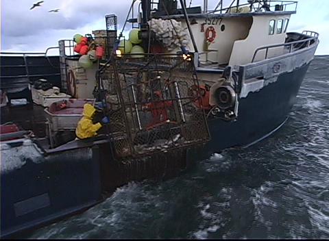 A crane pulls a crab-pot full of fish aboard a vessel Footage