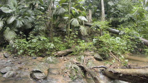 Water flows along rocky course of jungle stream on rainy day. with vegetation Footage