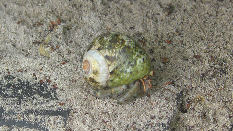 Hermit crab crawling on the sand Footage