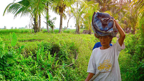 Local laborers carrying cargos on their heads on a Balinese farm. Video 4k Footage