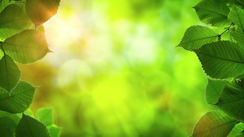 Sunshine Peeking through Tree Leaves with Bird Sounds. Video 4k Footage
