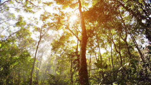 Misty rain forest and rays of sun. Psychedelic tropical landscape Footage