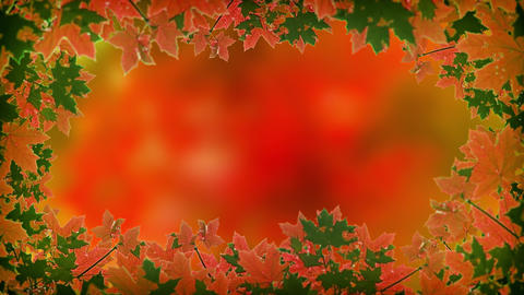 Abstract. Animated Frame of Autumn Maple Leaves. Video 4k Footage