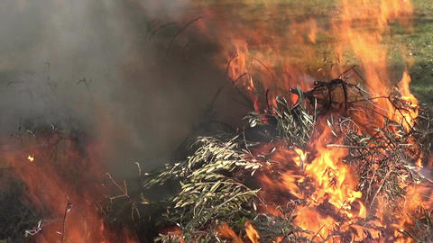 Burning Branches 3 Stock Video Footage