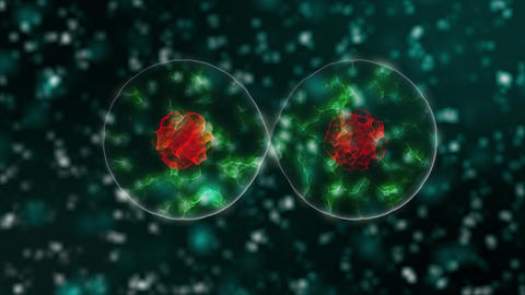 Stem cell with red nucleus is dividing on two cells on green abstract background Live Action