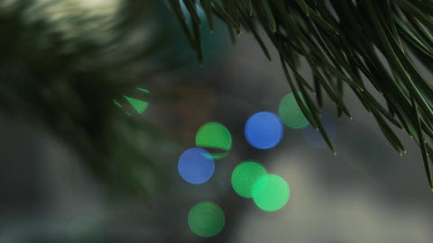 Bokeh Christmas garland. Spruce branch sways against the background of colorful Live Action