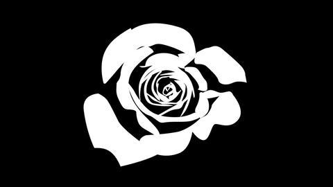 薔薇の花 開花アニメーション シルエット CG動画