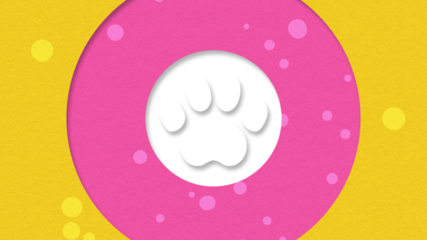 Paws transition pink 01 Animation