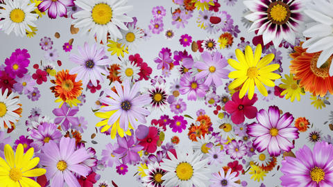 A space where flowers are floating, white background CG動画