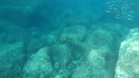 Fish and clear water in the Sardinian sea, Italy Live Action