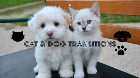 Cat & Dog transitions Motion Graphics Template