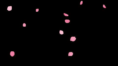 Cherry Blossom Confetti Falling Sakura mid 4K QTa Animation