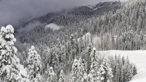 Winter mountains and snowy coniferous woodland covered hoarfrost aerial landscape. Beautiful winter Live Action