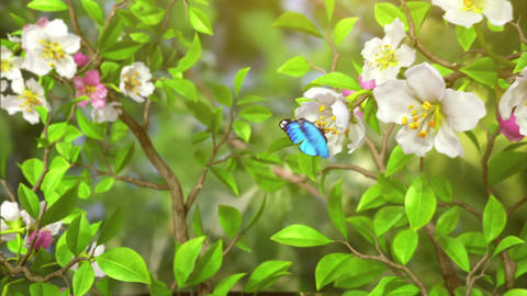 Butterflies in the bush, abstract nature background Animation