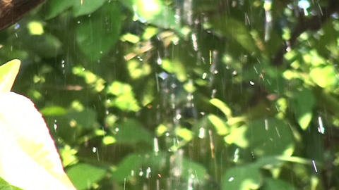 Raindrops Falling on Tree Branches (1) Footage