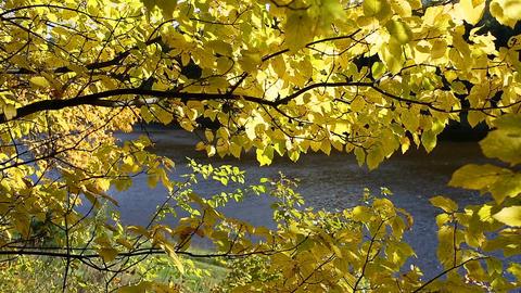 Autumn mood. Autumn leaves Footage