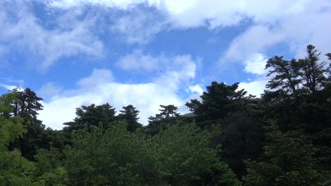 Forest against the Cloudy Sky Footage