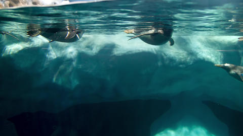 4k underwater video of pengiuns swimming in cold water near iceberg Live Action