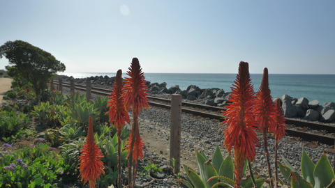 Scenic Landscape Marine bluffs on the beach, railroad and red flowers San Live Action
