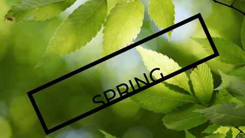 Spring season text on green leaves background, animated title banner Live Action