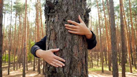 4k video of young woman hugging and soothing big tree in forest. Concept of Live Action