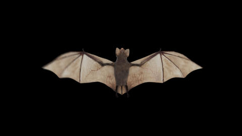 Corona Virus Bat Flying Alpha matte 4K Animation