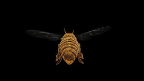 Follow flying honey bee Alpha matte 4K version2 CG動画