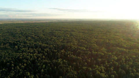 Flying above beautiful summer forest under blue sky near a small city Live Action