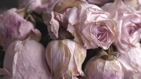 Faded bouquet of pink roses ライブ動画