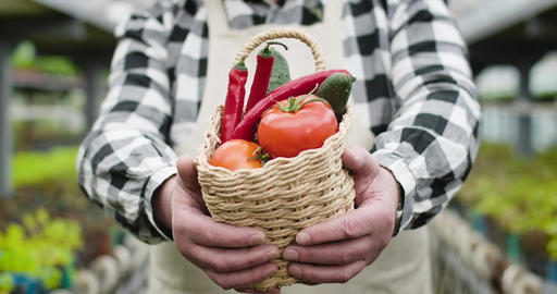 Close-up of mature male Caucasian hands showing basket with tomatoes, cucumbers Live Action