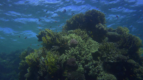 beautiful underwater scenery with numerous fish and coral reef formations Footage