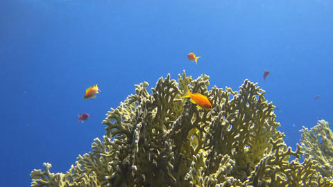 underwater corals and fish shined on by rays of sunlight Footage
