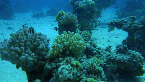 beautiful coral reef formations and fish inhabiting them on the bottom of the se Footage
