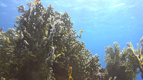 sunlight shines through the water surface, highlighting an underwater coral inha Footage