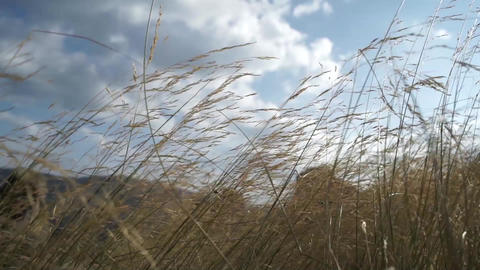 Grass. Wind shakes the grass at dawn Footage