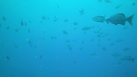 Underwater landscape in Grand Cayman Footage