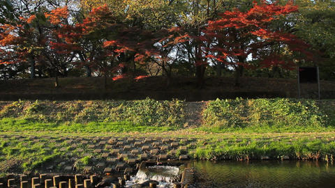 Autumn Leaves / River / Sound - Nogawa River / Musashino Park (Tokyo, Japan) - F Footage