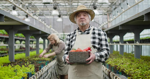 Senior Caucasian man in apron and straw hat walking to camera holding basket Live Action