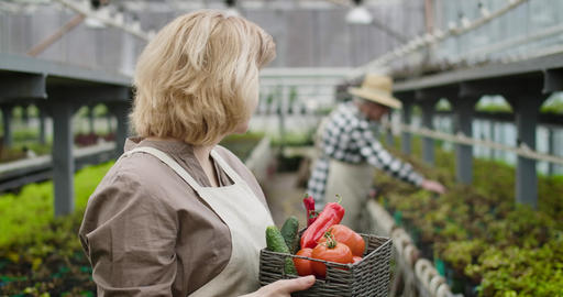 Close-up of positive Caucasian senior woman with vegetable basket looking back Live Action