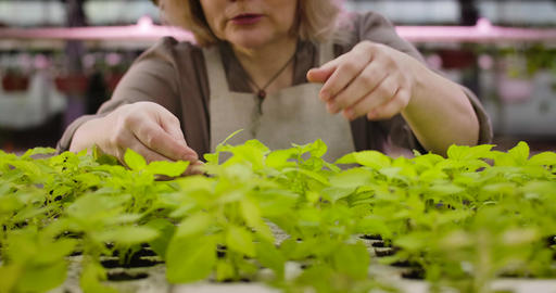 Unrecognizable Caucasian senior woman touching green leaves and talking to Live Action