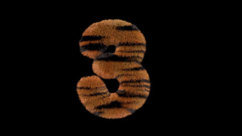 3D animated furry hairy zoo Tiger text typeface with alpha channel 3 Animation
