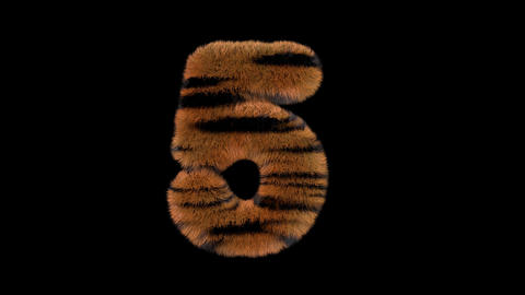 3D animated furry hairy zoo Tiger text typeface with alpha channel 5 Animation