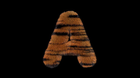 3D animated furry hairy zoo Tiger text typeface with alpha channel A Animation