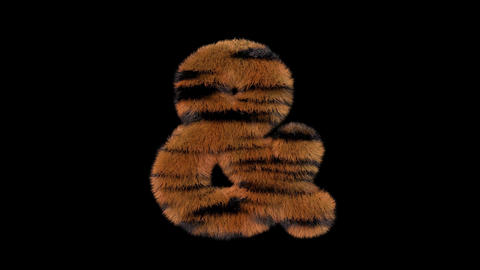 3D animated furry hairy zoo Tiger text typeface with alpha channel ampersand Animation