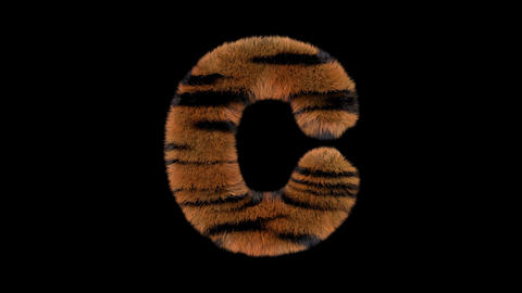 3D animated furry hairy zoo Tiger text typeface with alpha channel C Animation