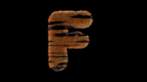 3D animated furry hairy zoo Tiger text typeface with alpha channel F Animation