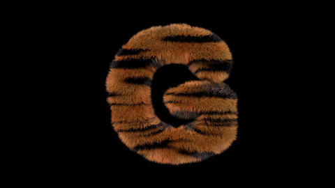 3D animated furry hairy zoo Tiger text typeface with alpha channel G Animation