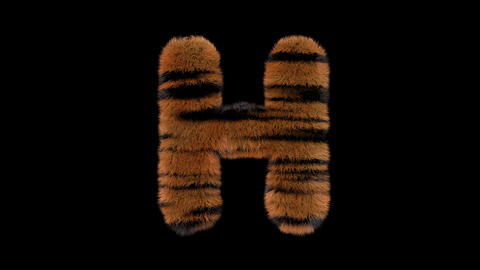 3D animated furry hairy zoo Tiger text typeface with alpha channel H Animation