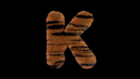 3D animated furry hairy zoo Tiger text typeface with alpha channel K Animation
